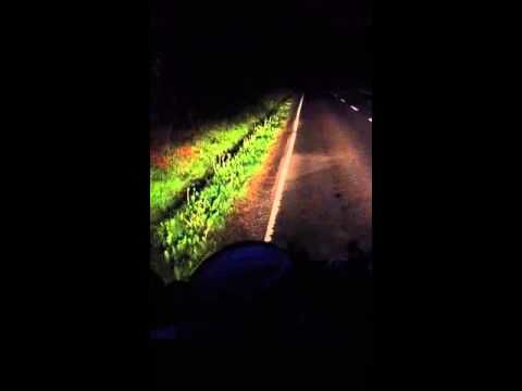 Scottish guys cursing at a rabbit that won't get off the road