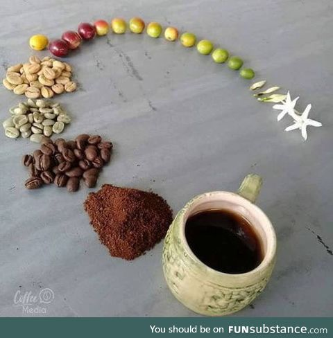 Coffee: From the flower to the cup