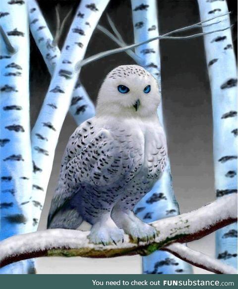 Beautiful snow owl