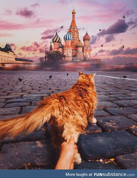 Cat in Moscow