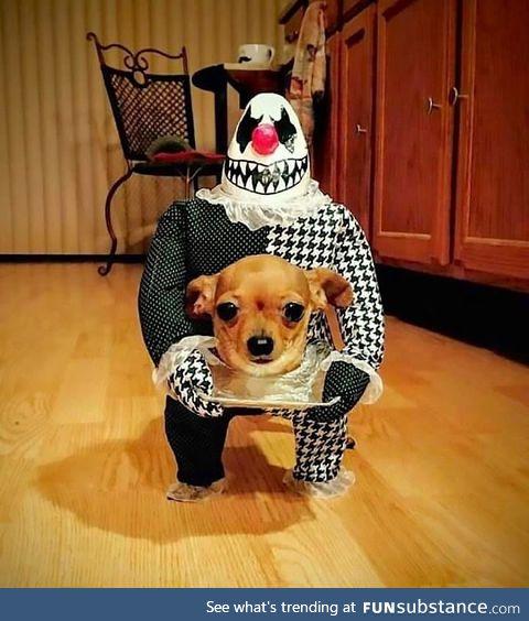 Headless pupper all ready for Halloween