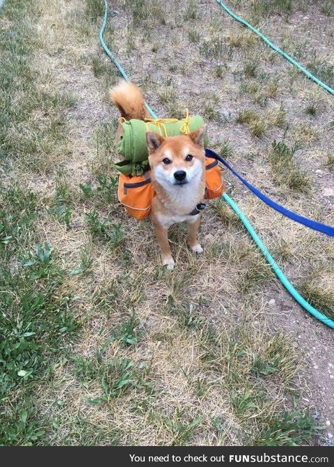 Adventure shibe reporting for duty