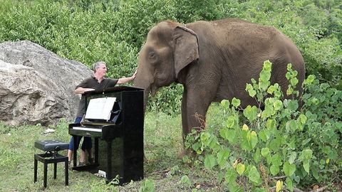 Man plays 'clair de lune' on the piano for an 80 year old elephant