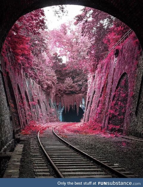 Tunnel of pink