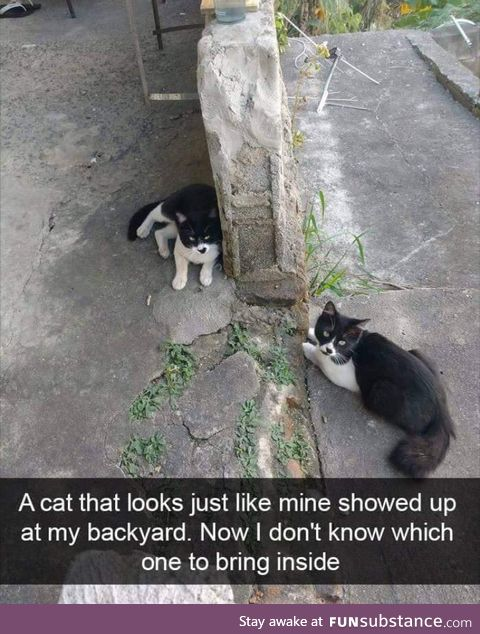 The kitty trap