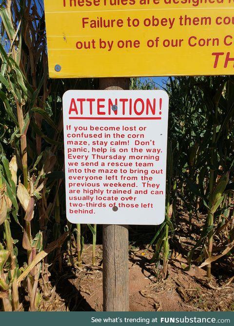 At a corn maze