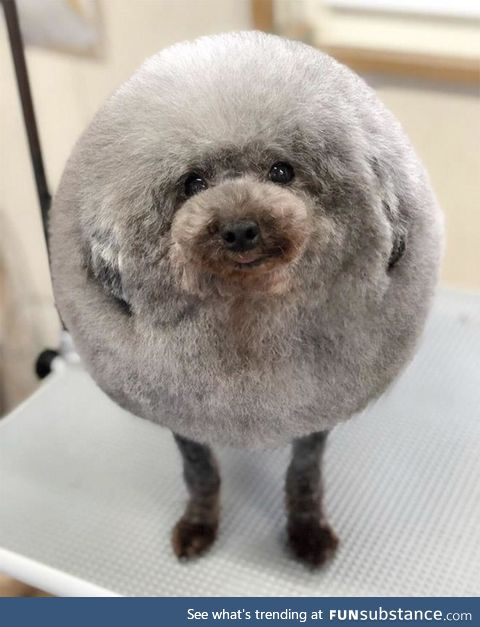 Best haircut a dog could ever want!