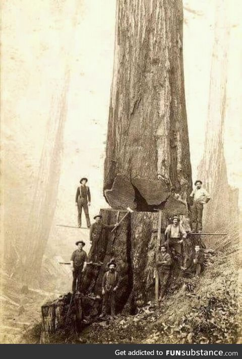 Loggers in 1880