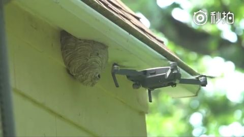 Wasp hive VS drone