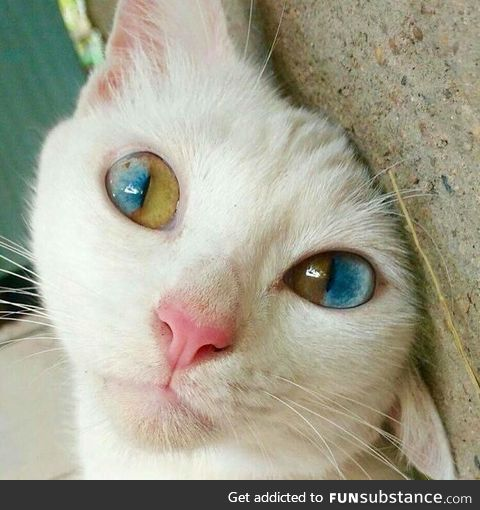 This cats eyes