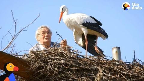 The Little One (Man and rescued stork wait every year for her mate to return home safely)