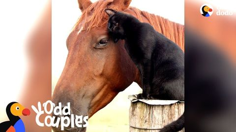 Cat rides his favourite horse every day (Feelgoodsubstance)