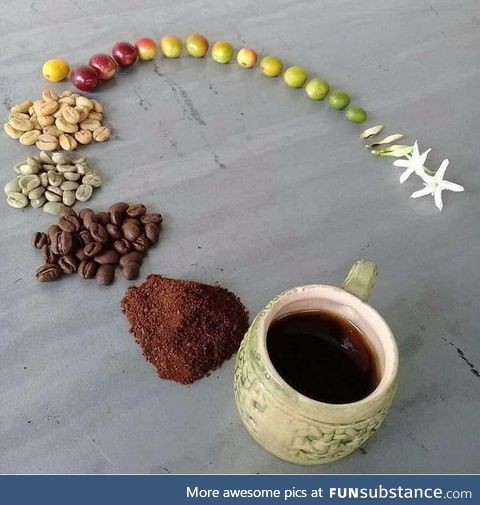 Life cycle of a coffee