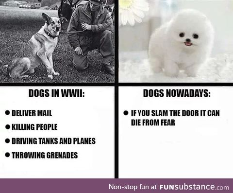 Dogs > Rats