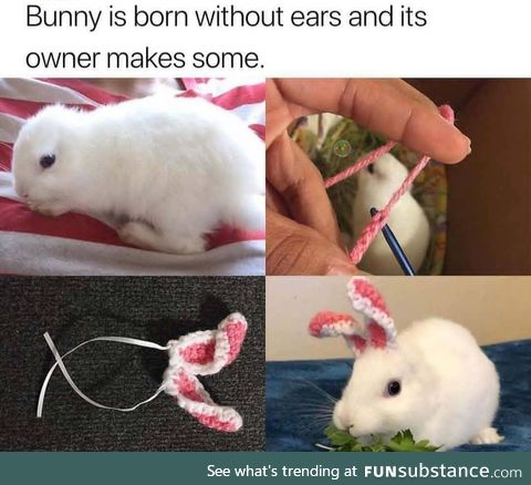 he's born without ears.. now he got new ones :3