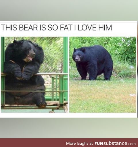 Can you relate to the bear?