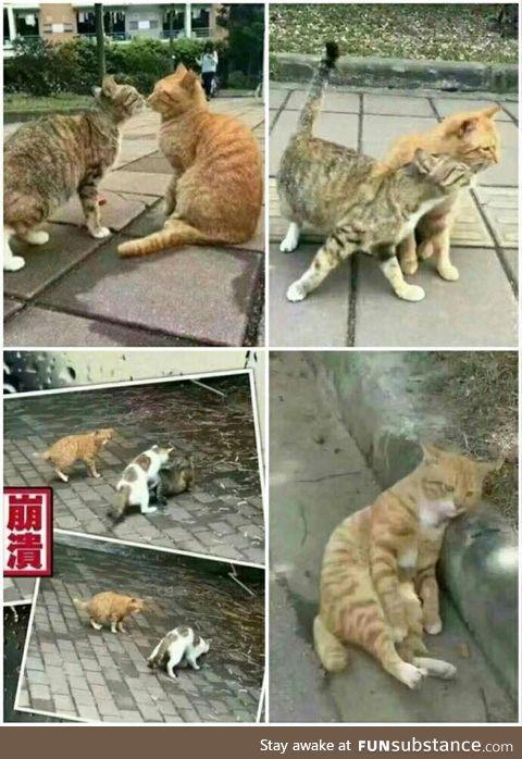 Story of Betrayal