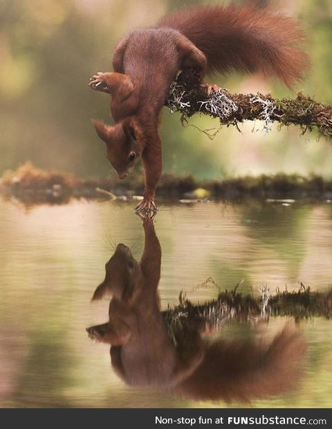 Squirrel touching water by Marco Tonetti