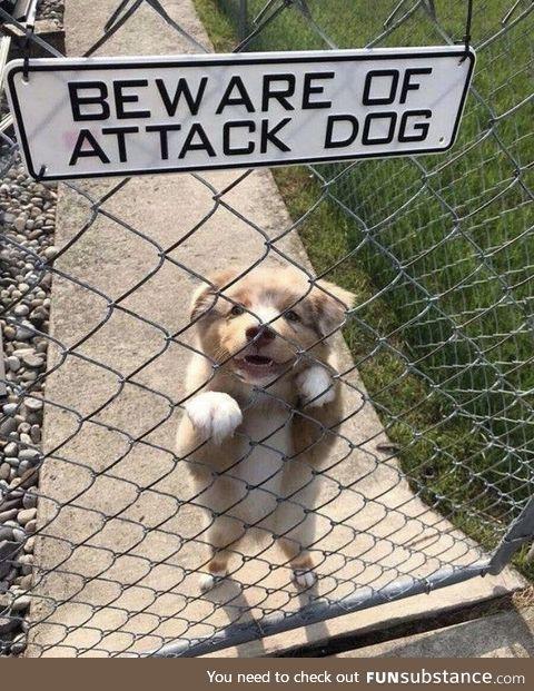 PLEASE.. attack me.. !! *_*