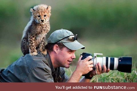 Some say he's still there waiting to get a oic of a cheetah cub
