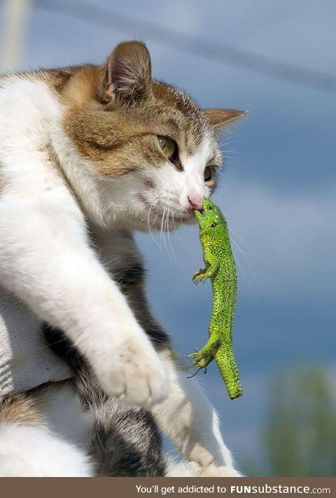 Poor cat get's bitten