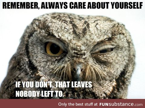 Owls are as wise as they are blunt