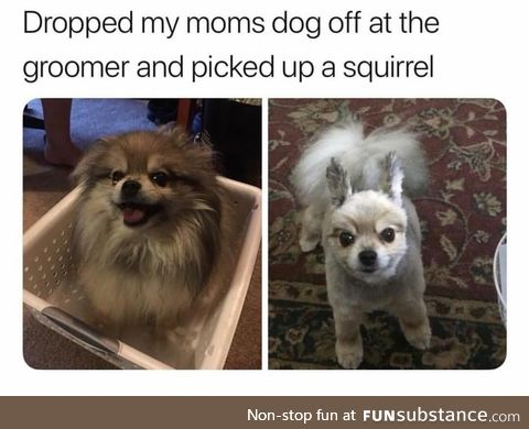 Dog to squirrel converter
