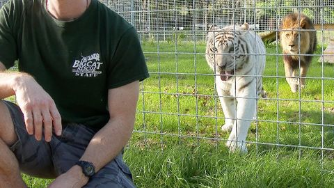 Never turn your back on Big Cats
