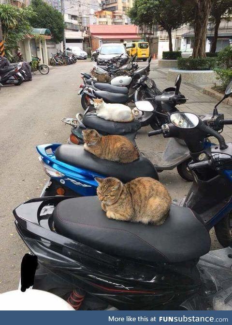 Motorbike security guards