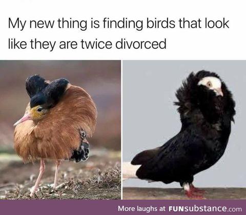 Fancy fowl