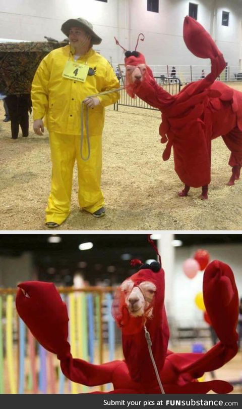 A llama in a lobster costume, that is all