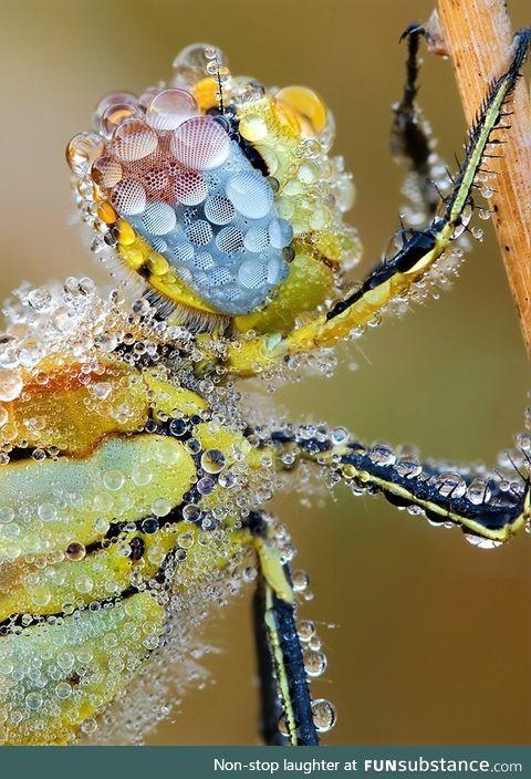 Dew on a dragonfly