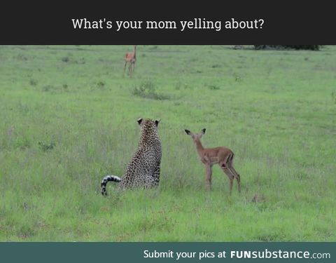 What's your mom yelling about?
