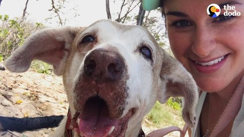 Good Things Come to Pirate, who lived 7 years in a Shelter (FeelGoodSubstance)