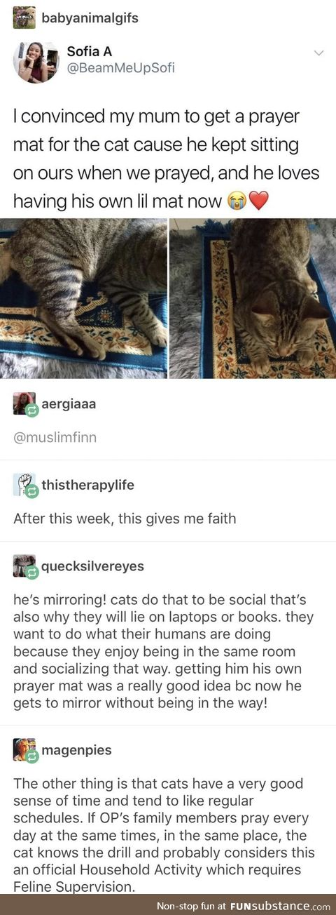 So I guess their cat converted to Islam