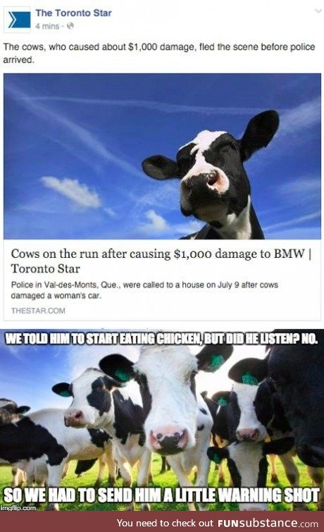 He messed with the wrong herd