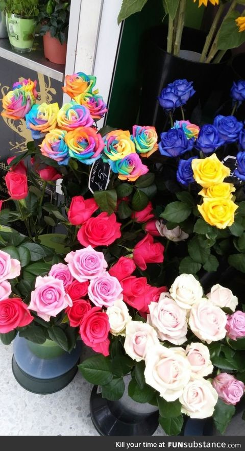 Rainbow-roses spotted in London