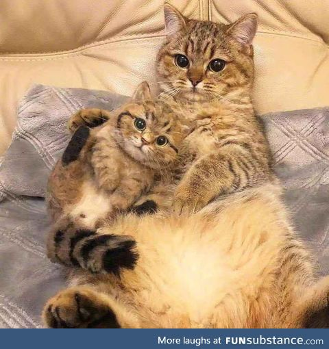 Mother & Little Baby, waiting for a picture from their owner