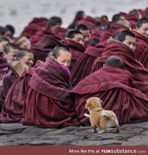 Monk smiling when he sees a curious puppy