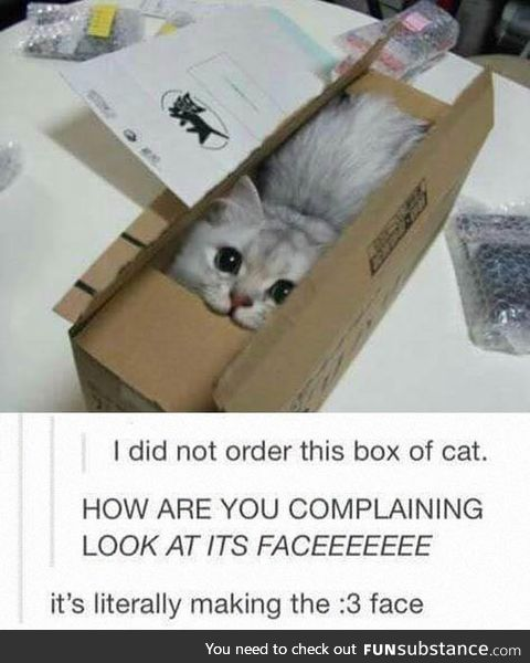 Just a box of cat