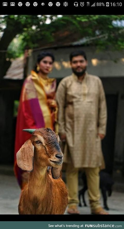 Don't hire a wildlife photographer for wedding photography