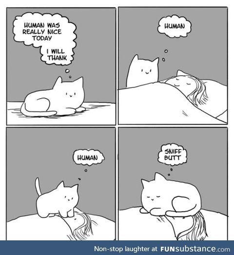 True cat love
