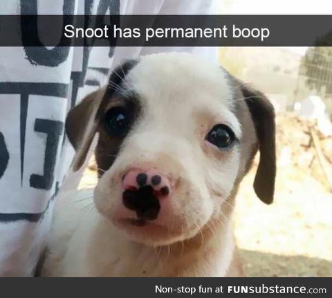 Permanent boop