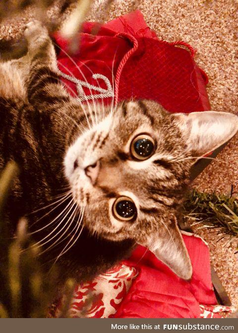 Kitty Christmas Photo
