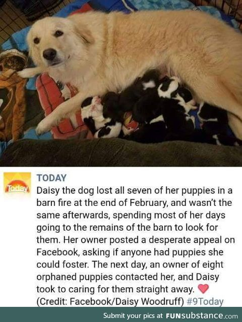 Daisy's second chance