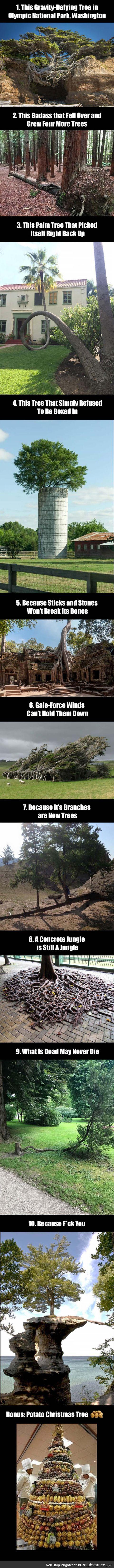 10 Badass trees that refused to die