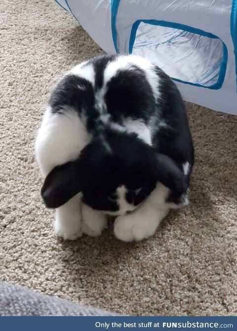 Our rabbit