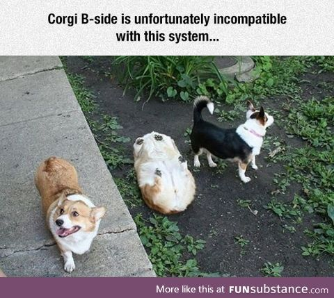 Corgi has stopped working