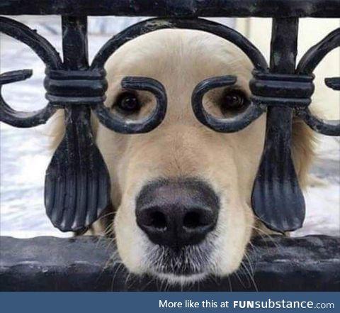 This dog looks like Benjamin Franklin