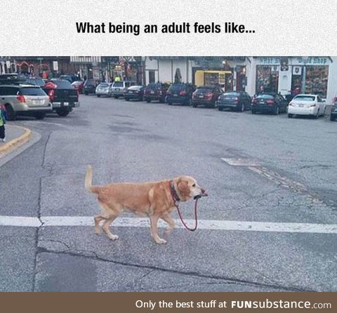 Being an Adult In A Nutshell